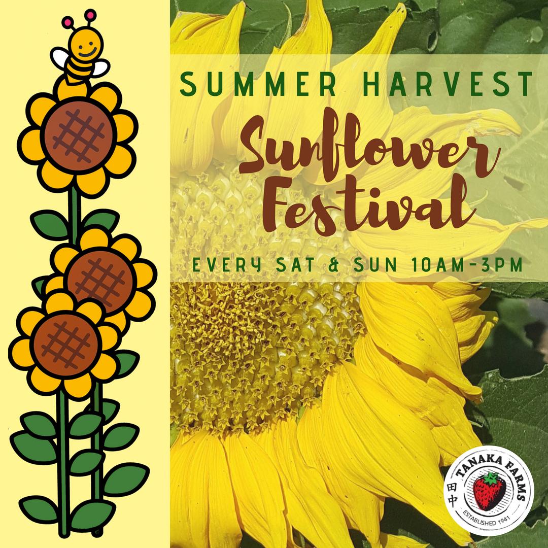 Sunflower Harvest Festival (1).png