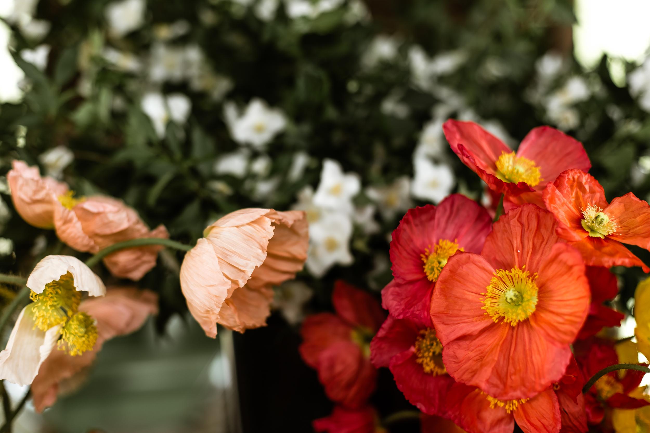 spring beauty day-3776.jpg