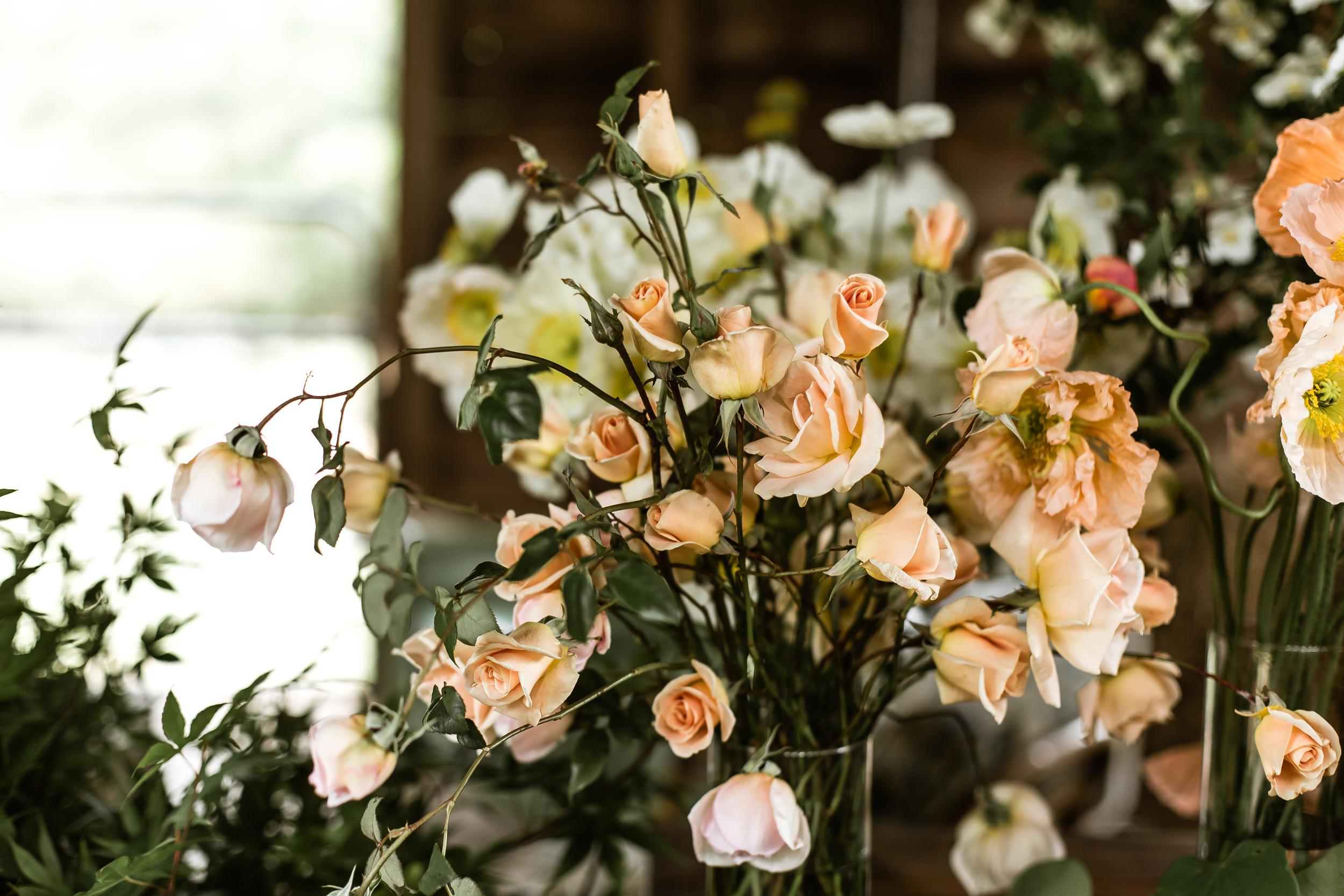spring+beauty+day-3769.jpg
