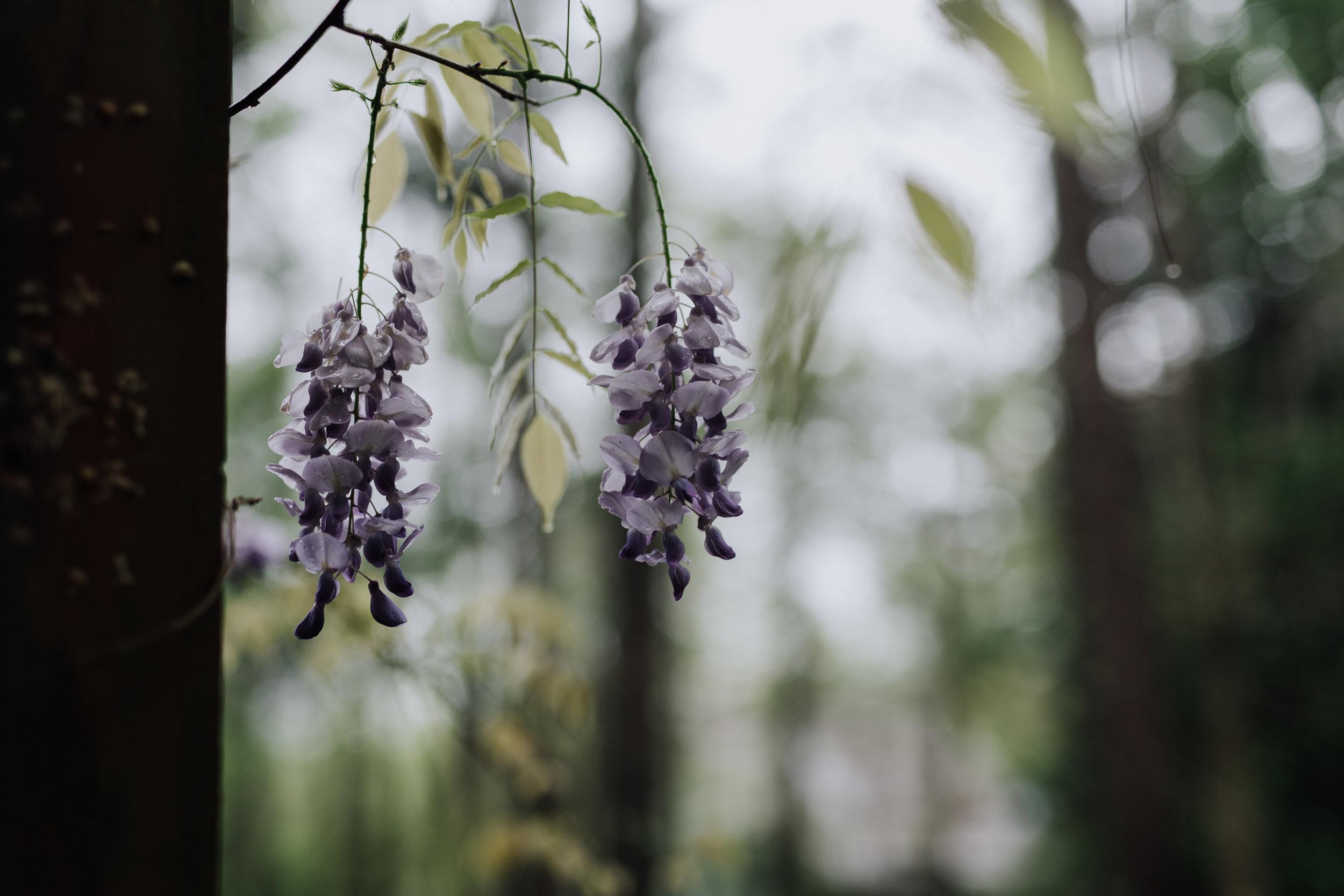 spring 2019-1420.jpg