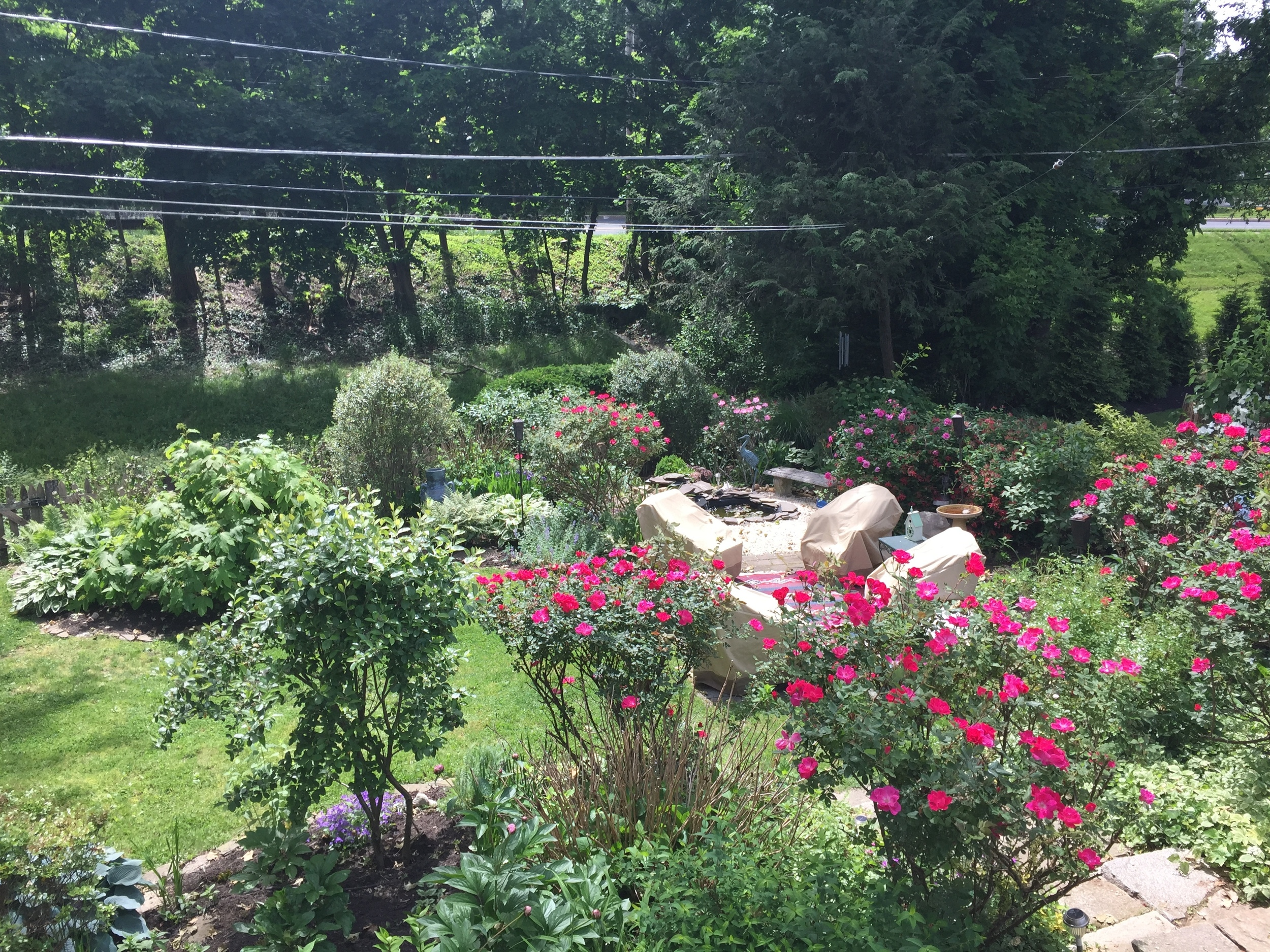 Standing on the deck overlooking part of the back yard, patio and pond. Rose bushes are just beginning to explode in color and scent.