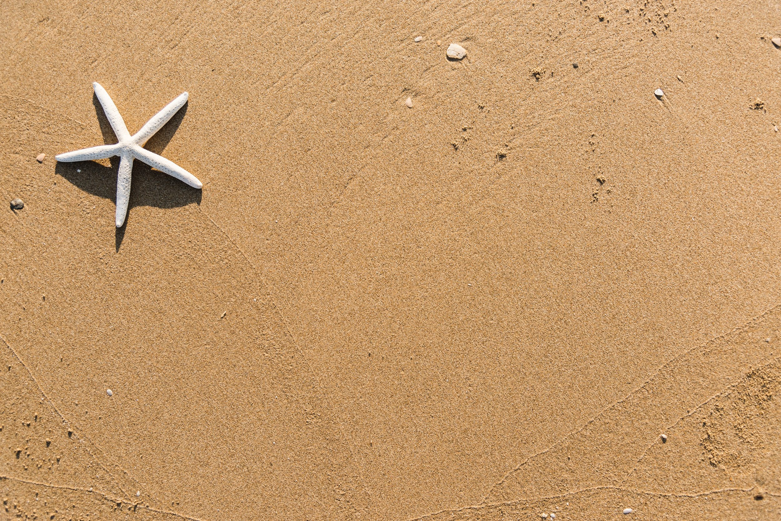 Single grains of sand compose the beautiful beach…