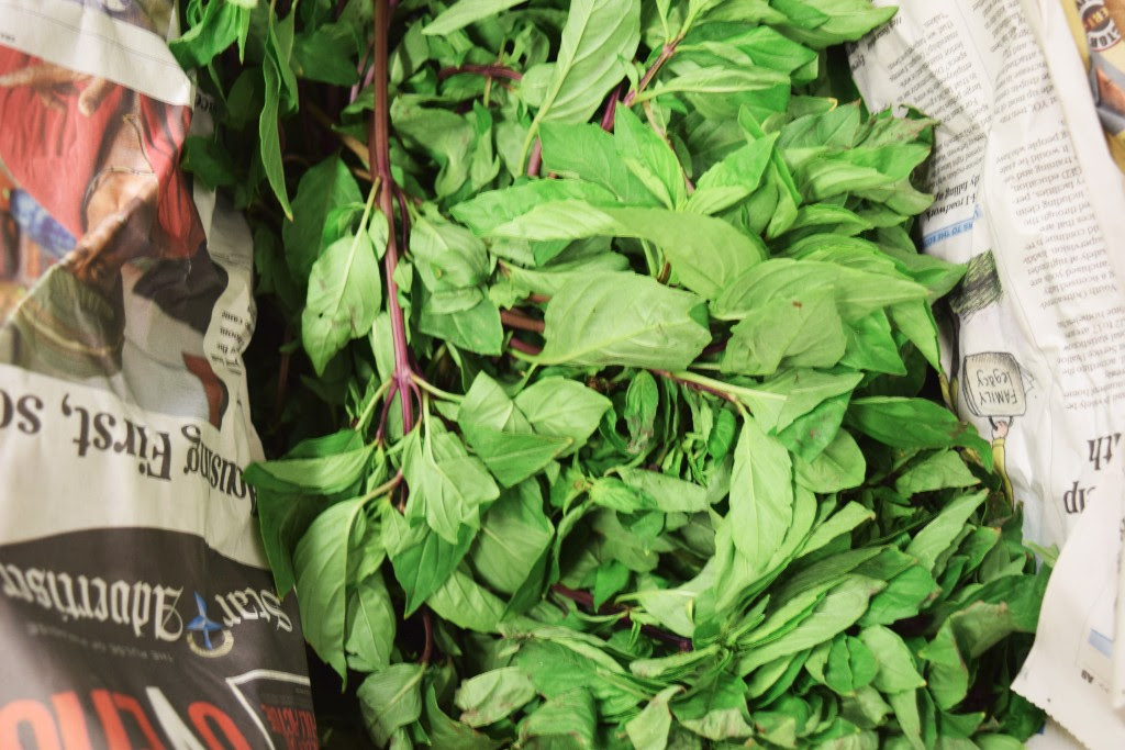 Fresh Thai Basil at our Commissary