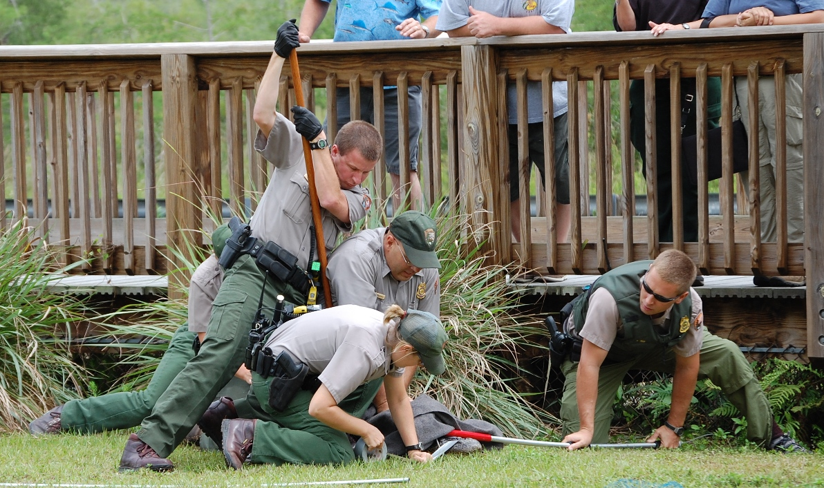 With other rangers ay Big Cypress national preserve in 2007 having to move an alligator out of a visitor area.
