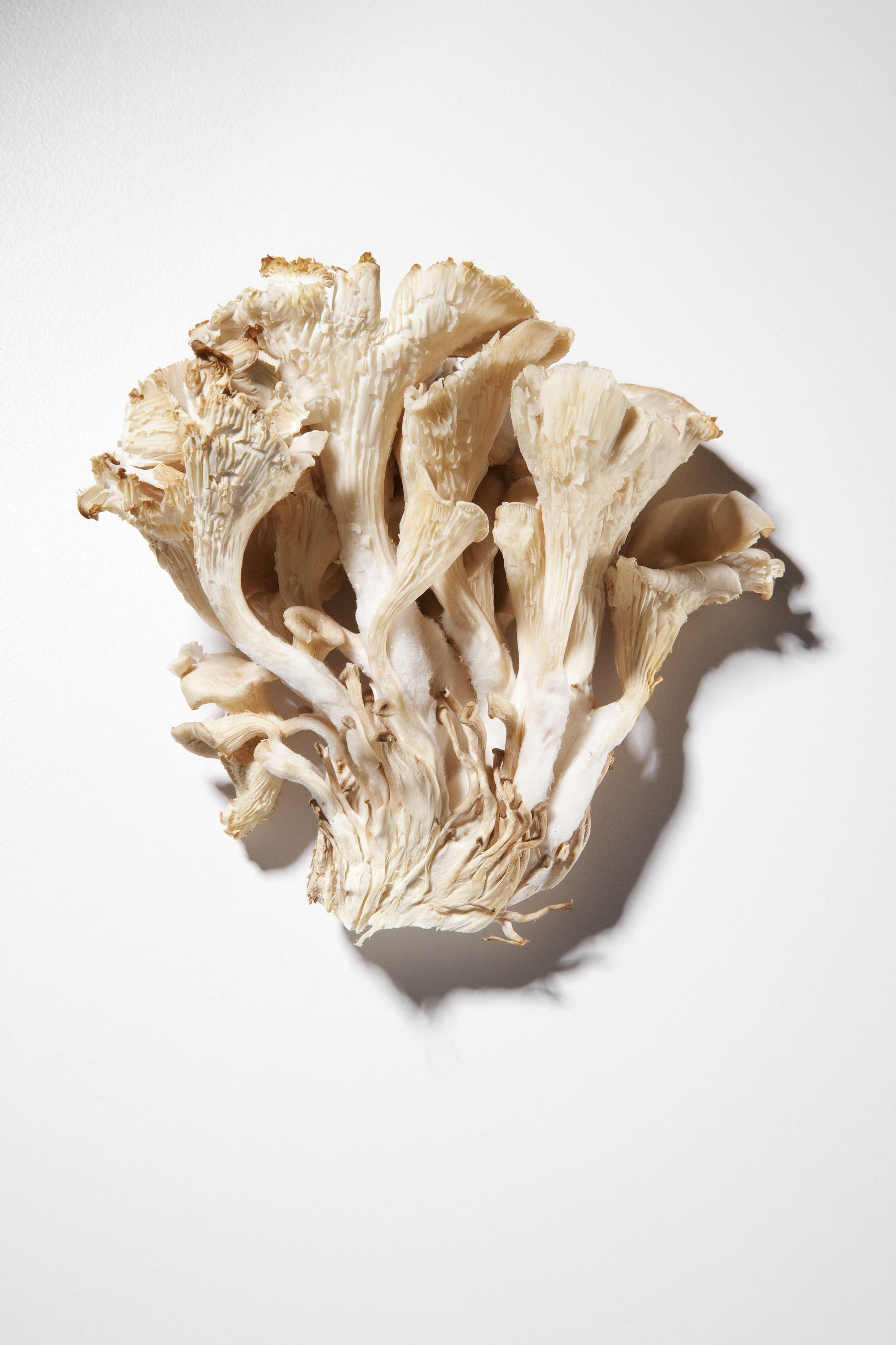 Oyster_Mushroom_Final.jpg