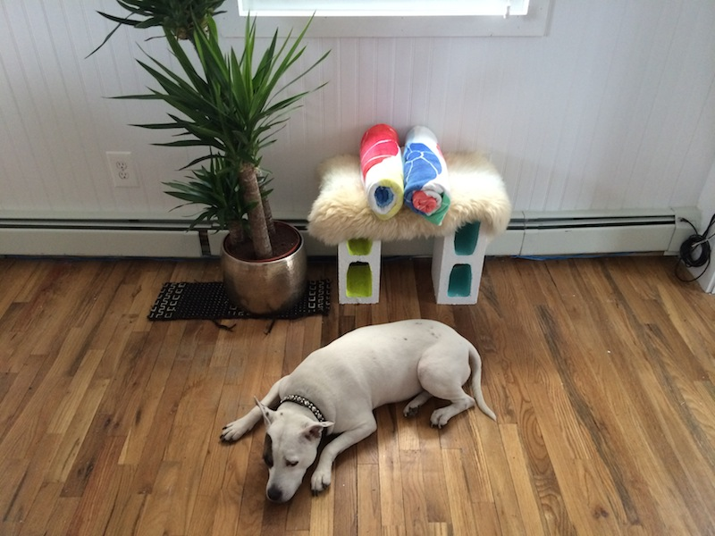 Kaya napping! A bench we built in the living room using cinder blocks, with a wood top covered in sheepskin.