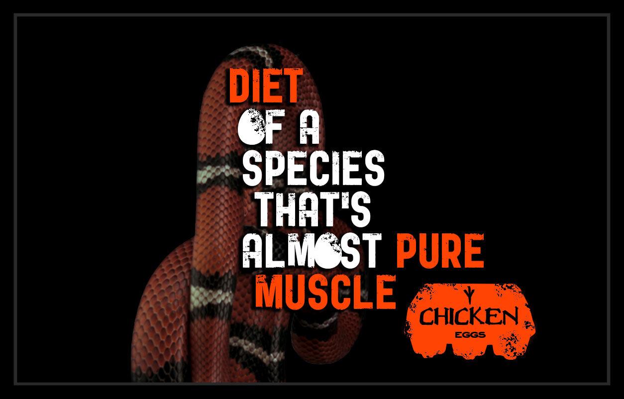 eggnergy billboards - muscle.jpg