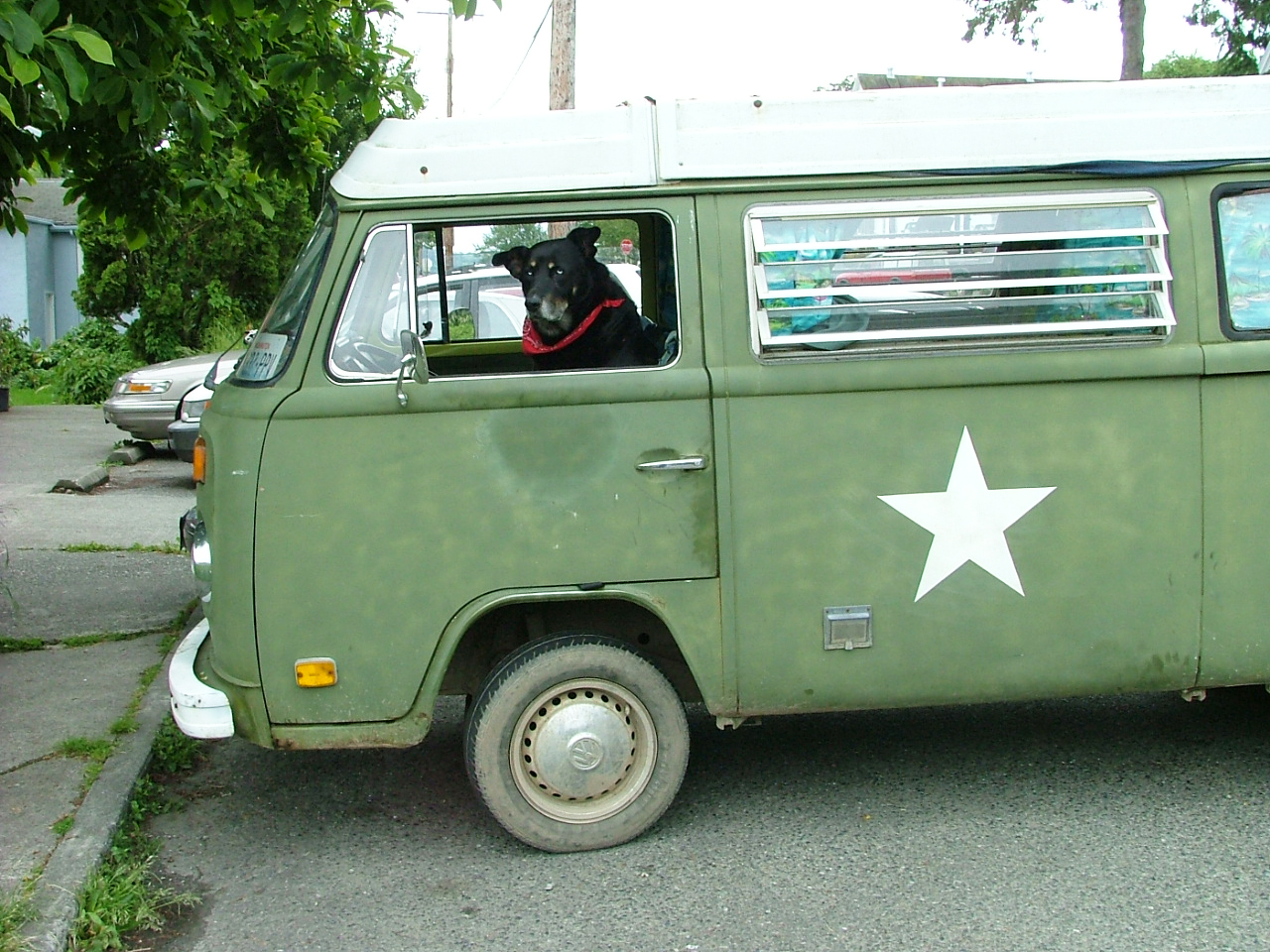 DEXTER, PARKED AT THE BURTON POST OFFICE IN HIS KEEPER'S 1972 VW ARMY BUS.