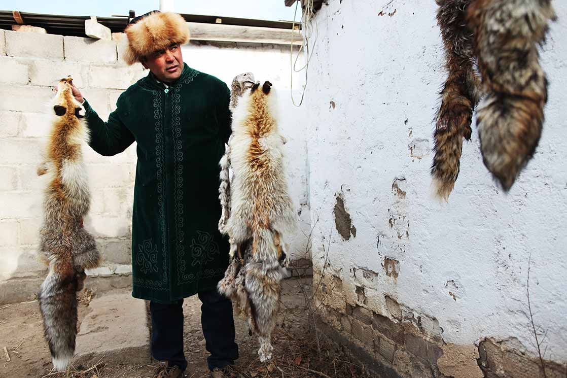 Eagles hunt wolves, foxes and rabbits | KYRGYZSTAN