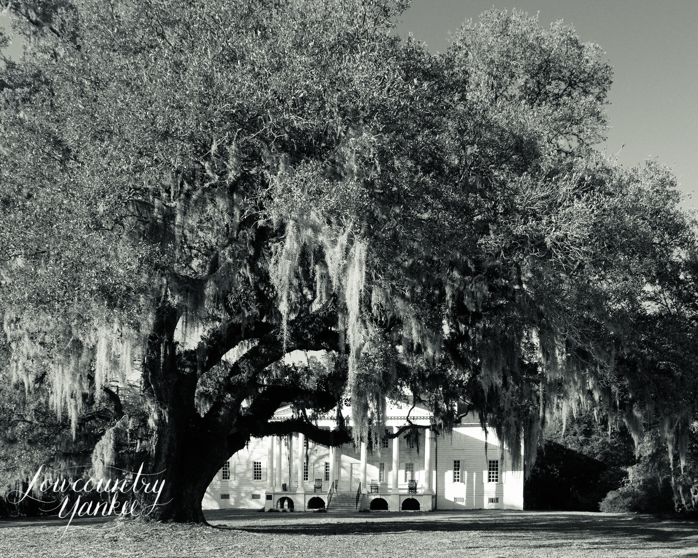 The Hampton Plantation house framed by the George Washington oak.