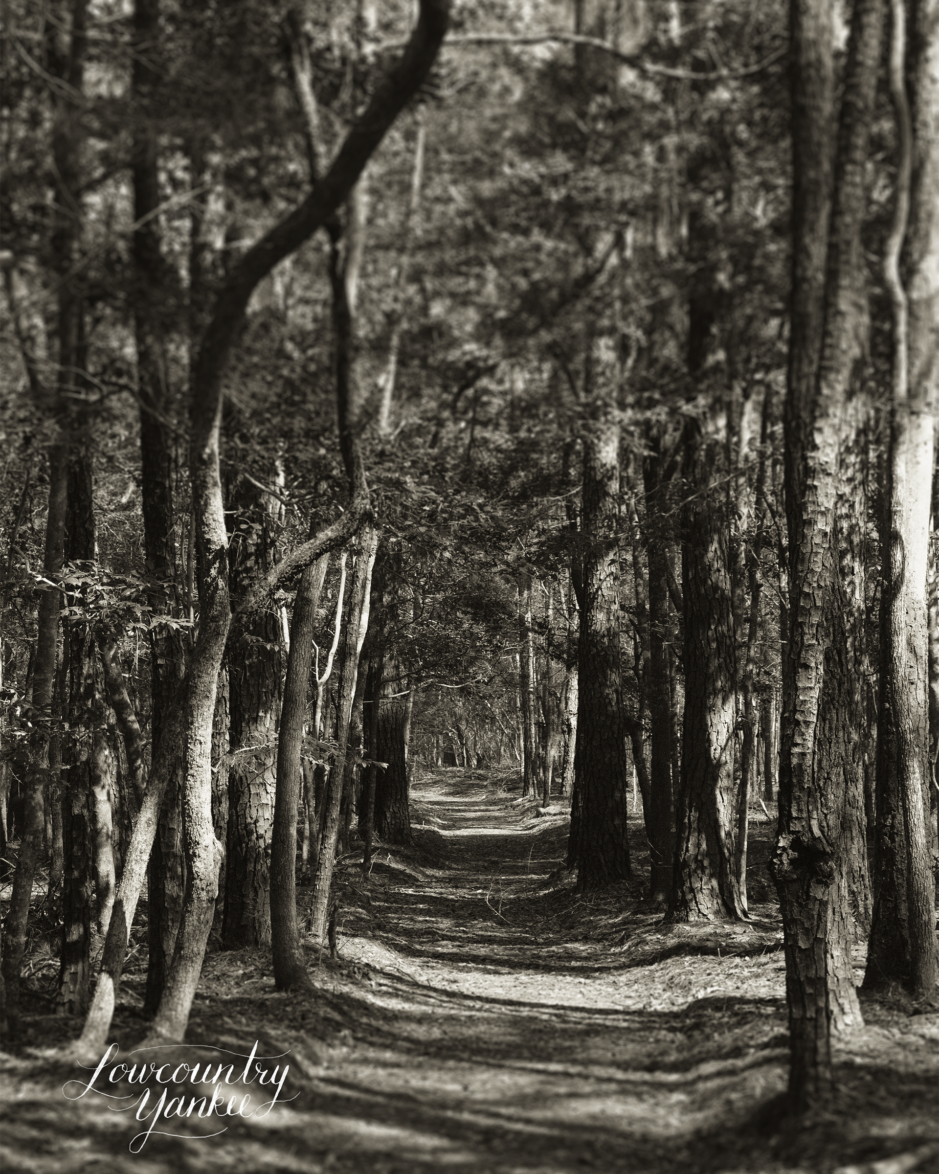 A well-worn path through the woods.