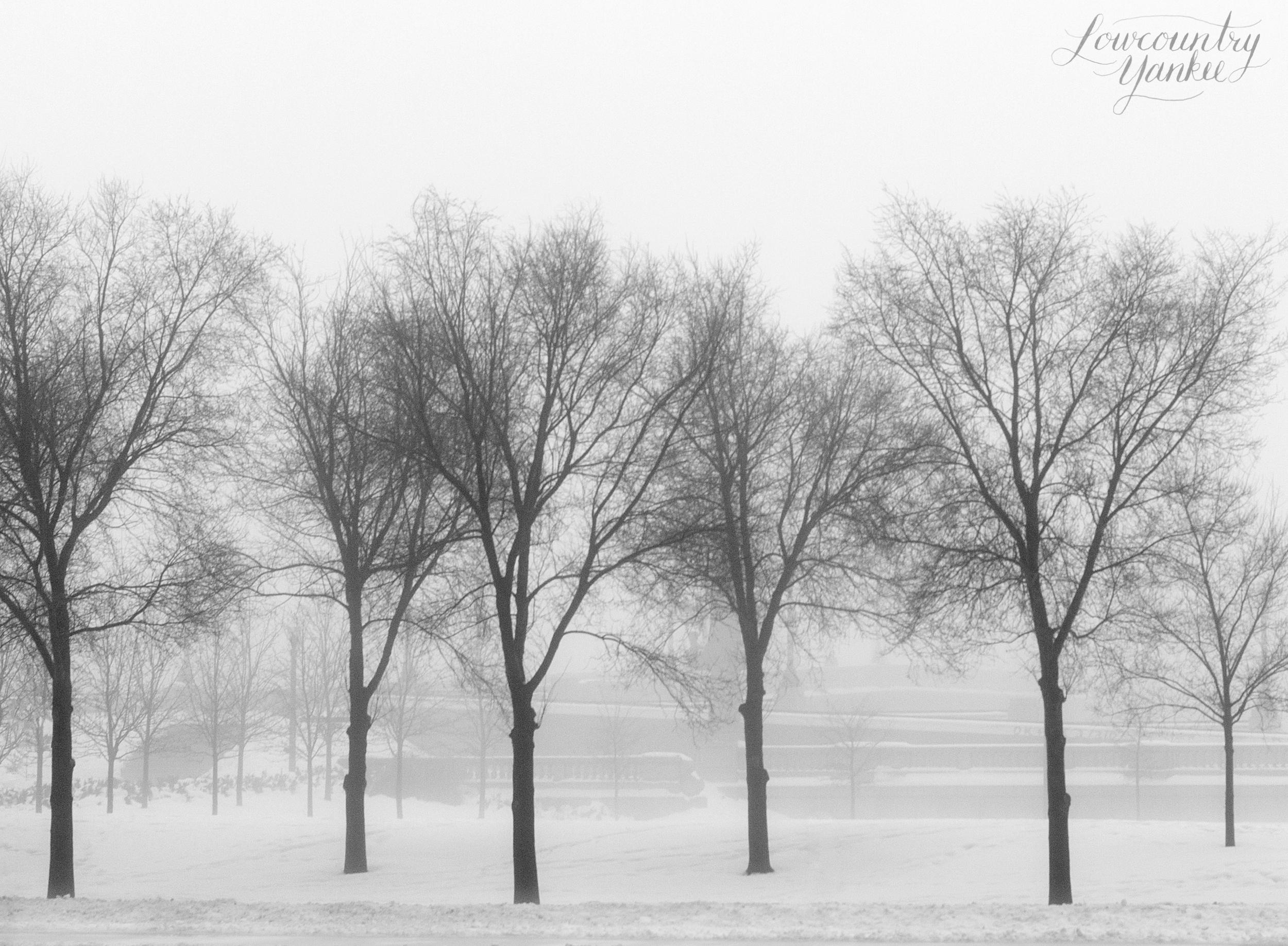Snowstorm.S. Michigan Avenue, Chicago, Illinois2008