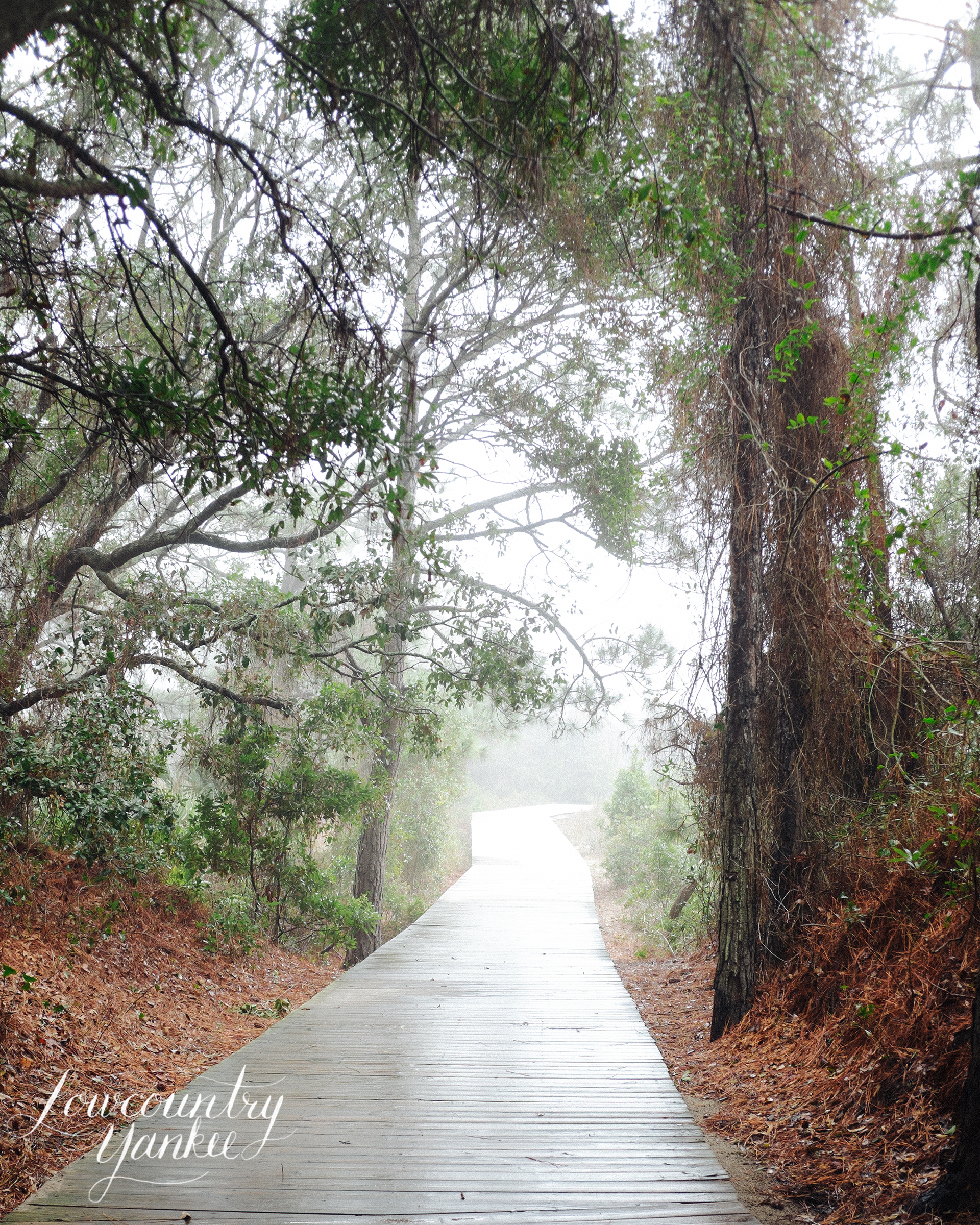 Path to Beachwalker Park, Kiawah Island, SC
