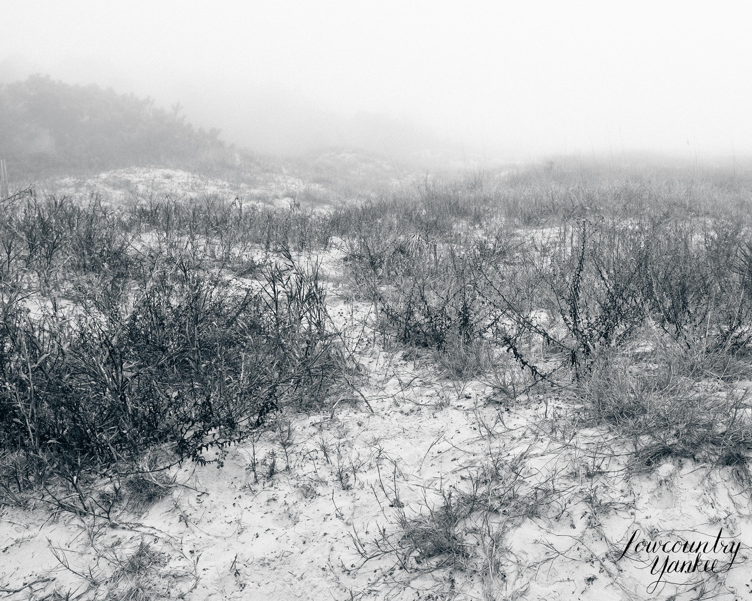 Foggy sand dune
