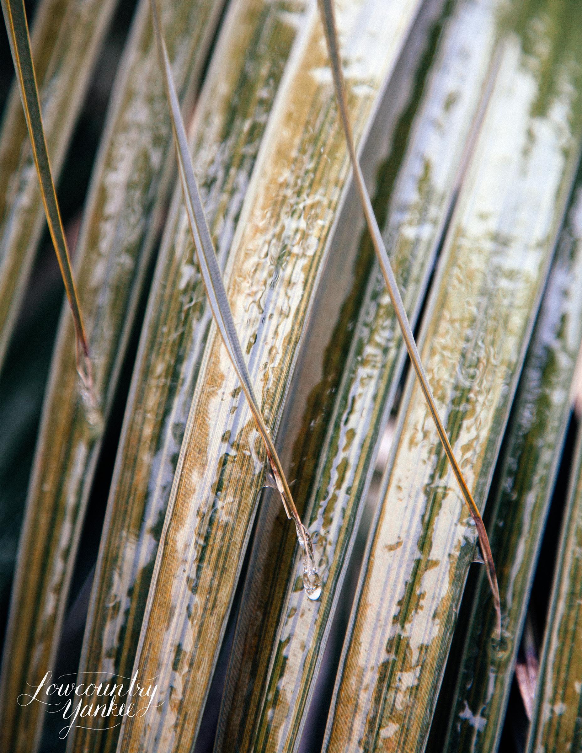 palmfrondlight.jpg