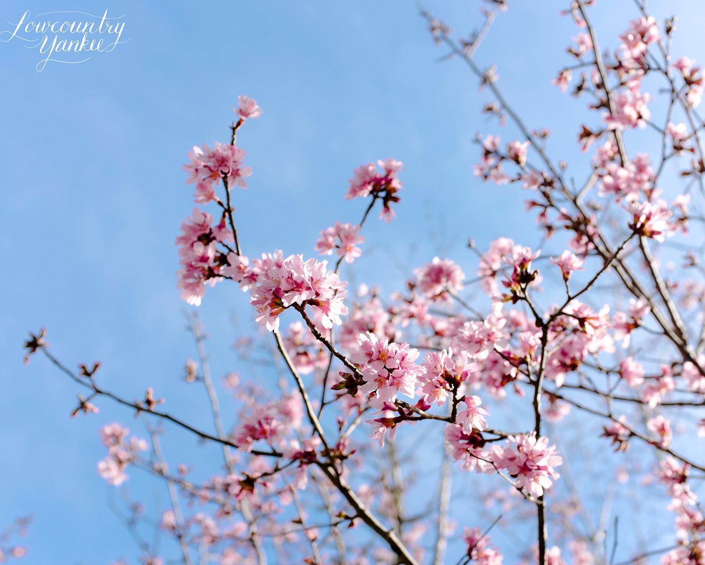 Last spring, Charlestowne Landing, SC