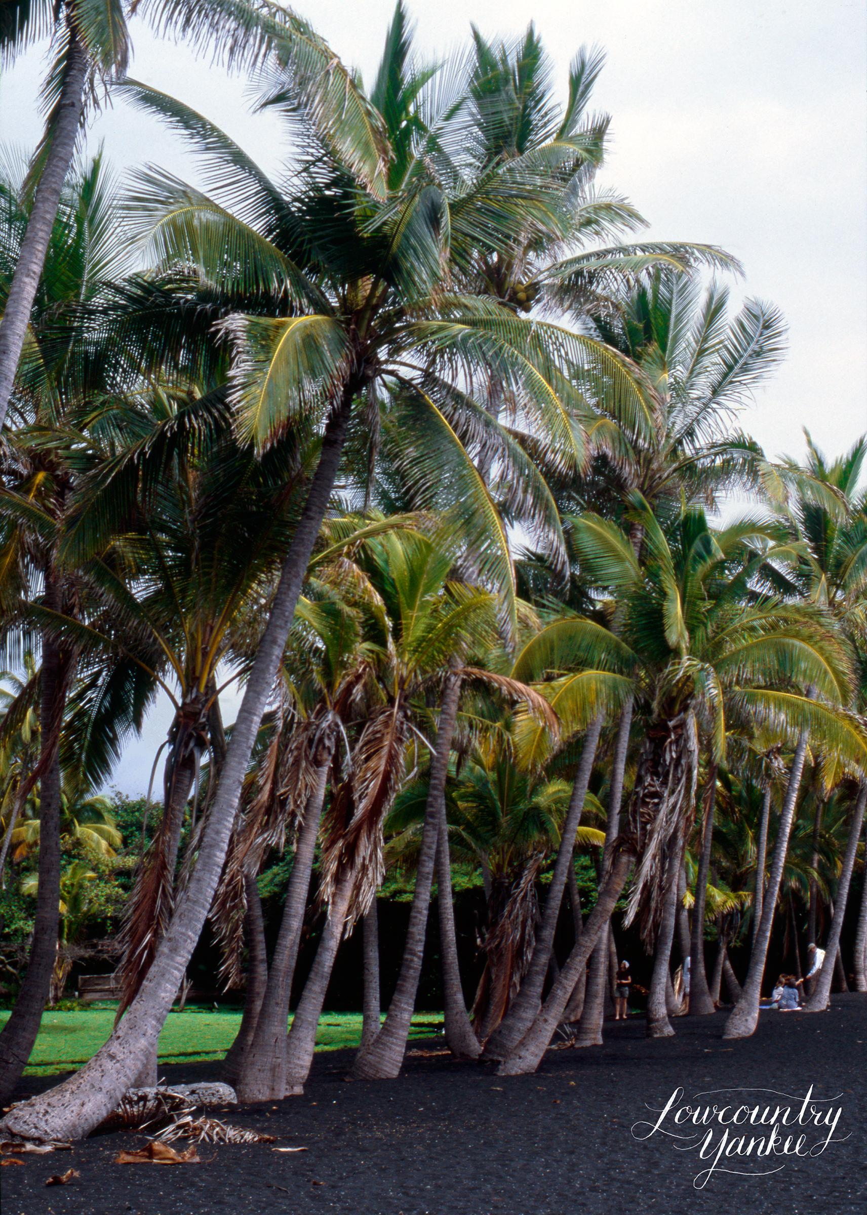 Punalu'u Beach,Hawai'i 2004. Slide film.