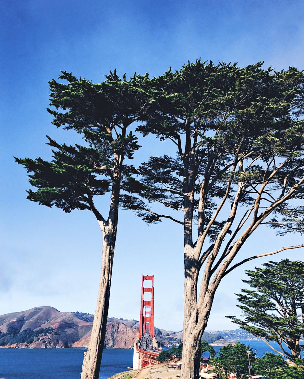San Francisco, my love.