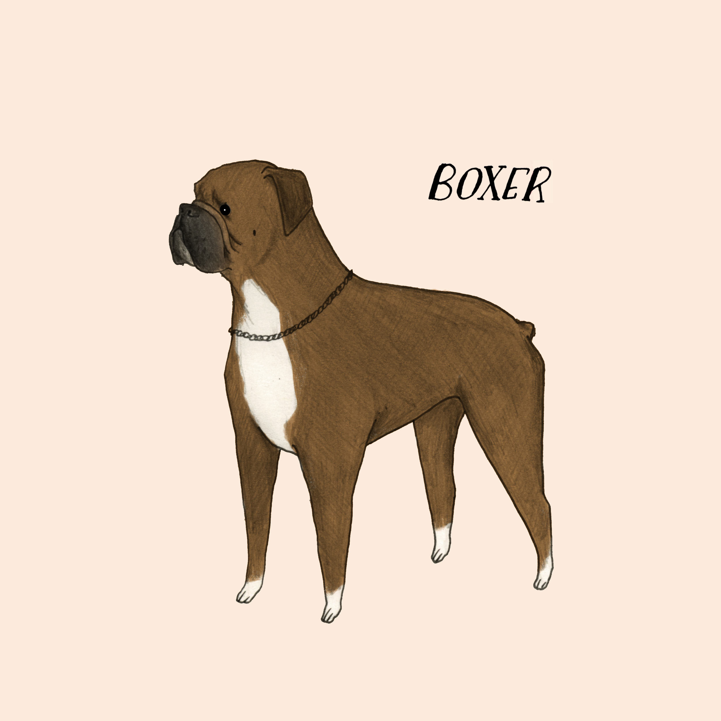 Dogadayboxer.jpg