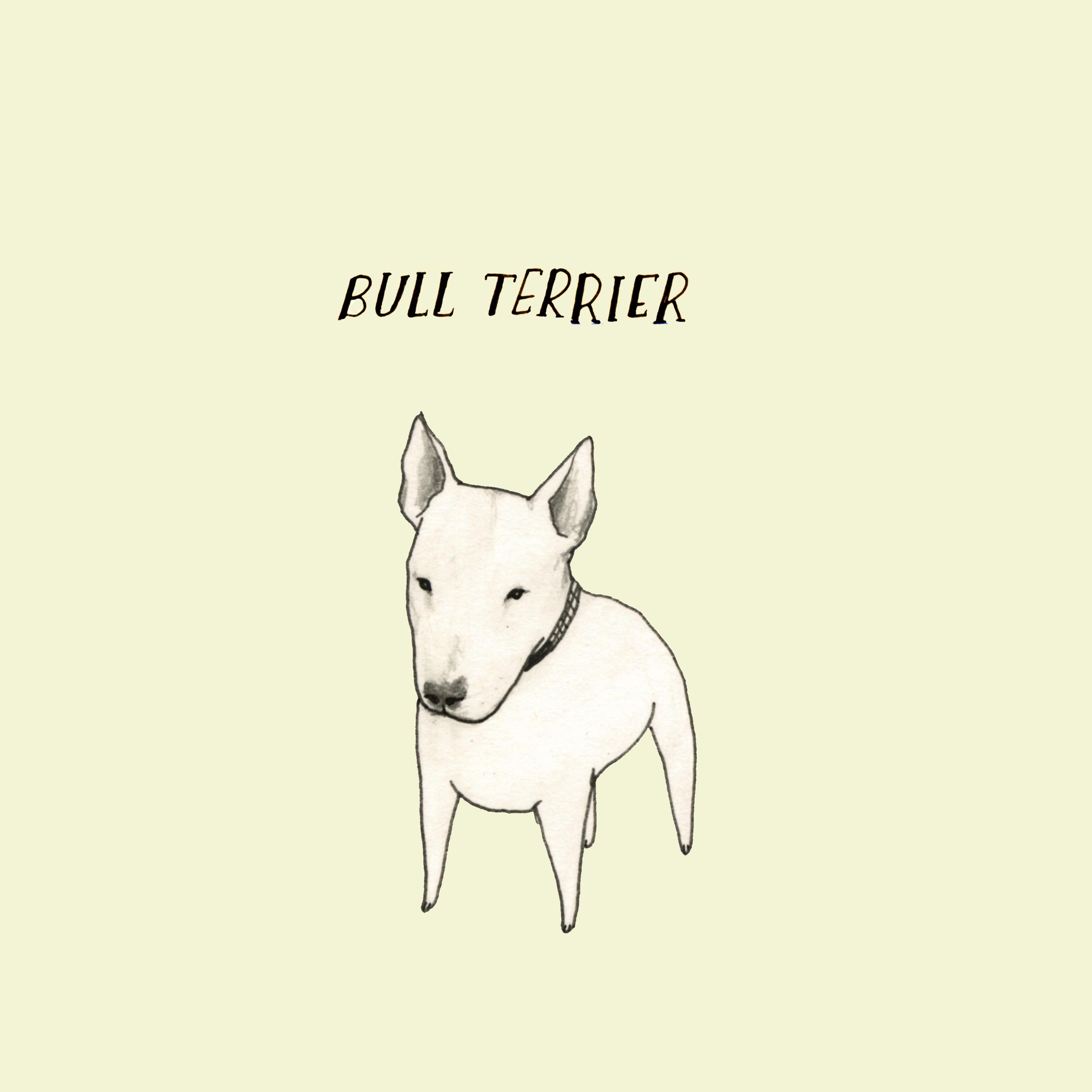DogadayBullTerrier.jpg