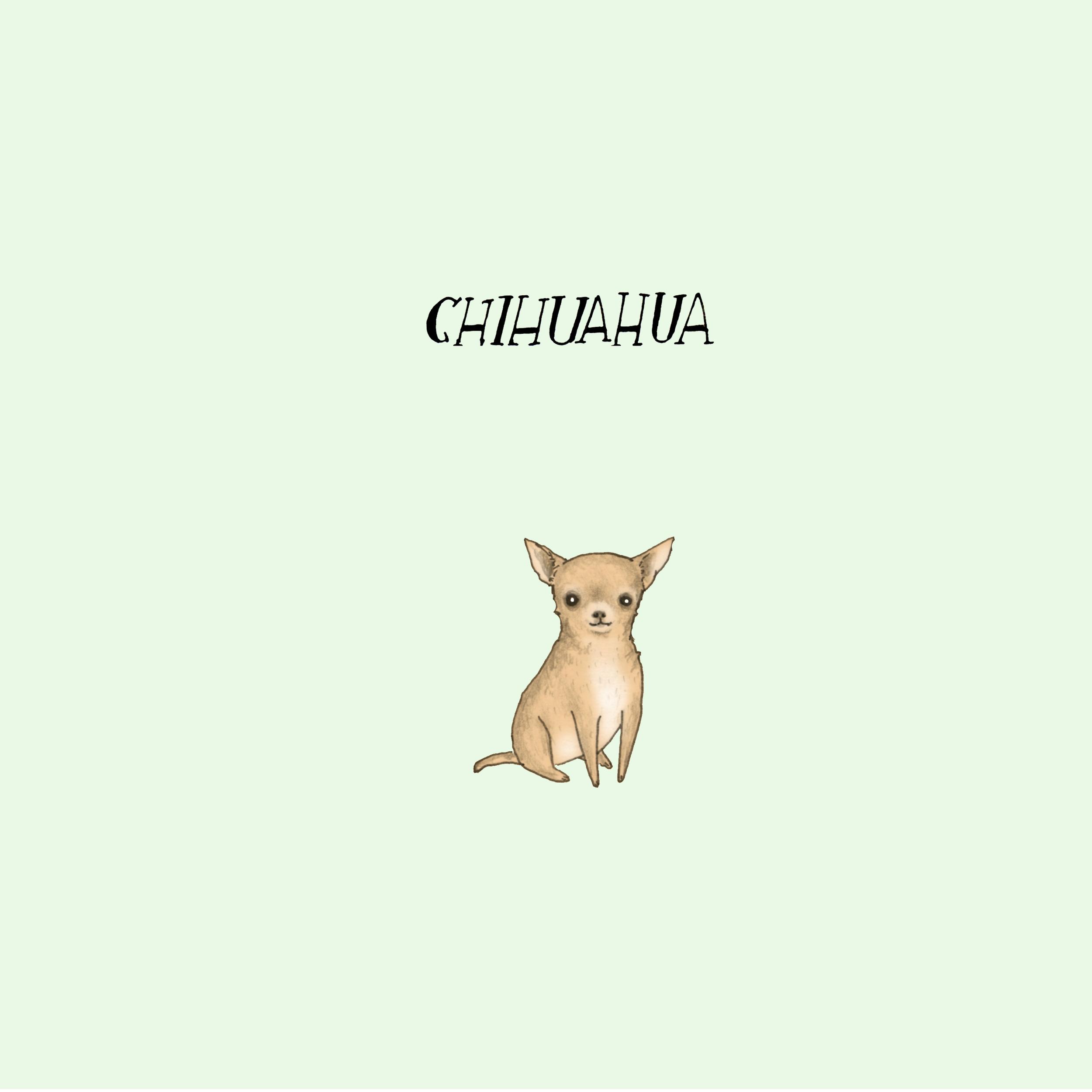 Dogadaychihuahua.jpg