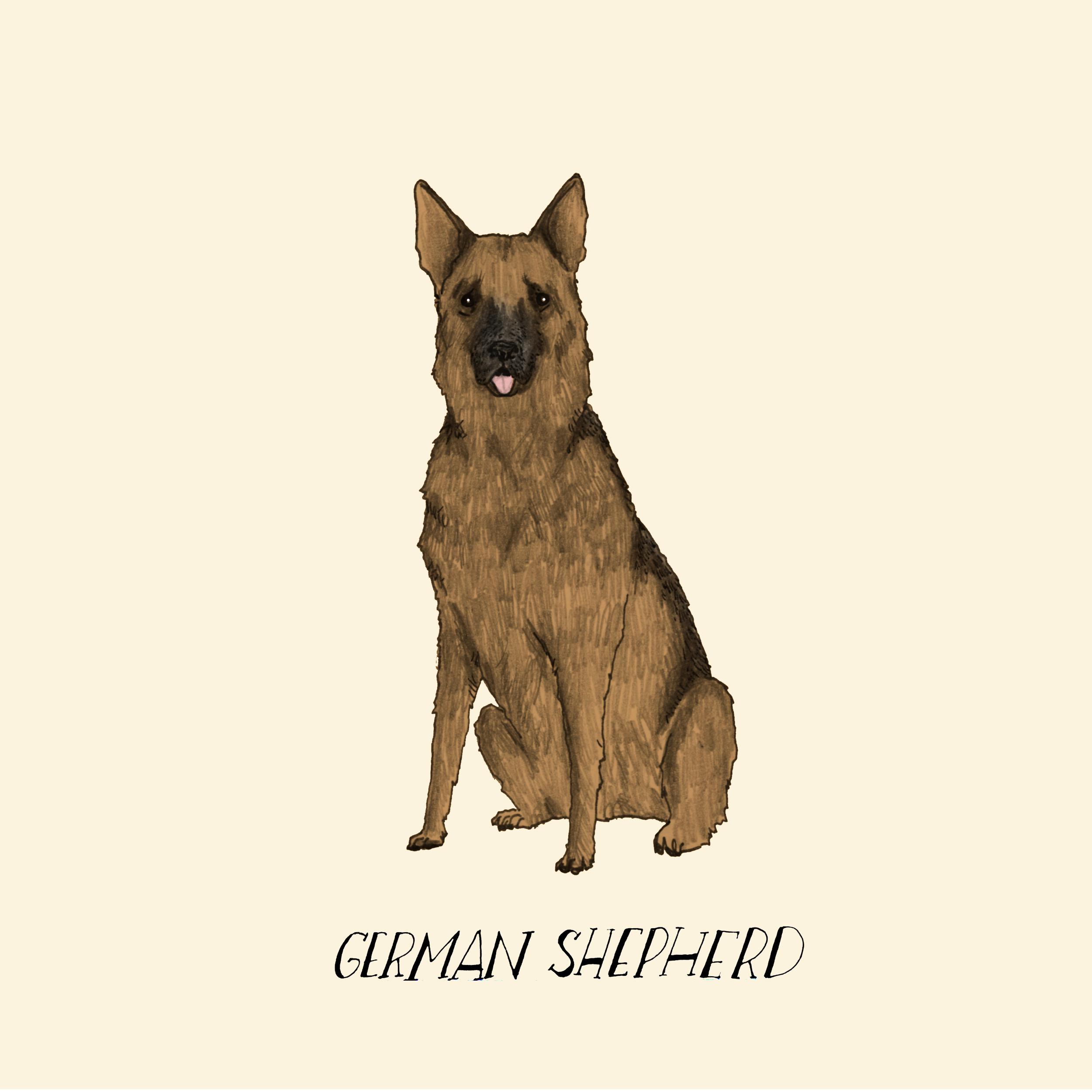 Dogadaygermanshepherd.jpg