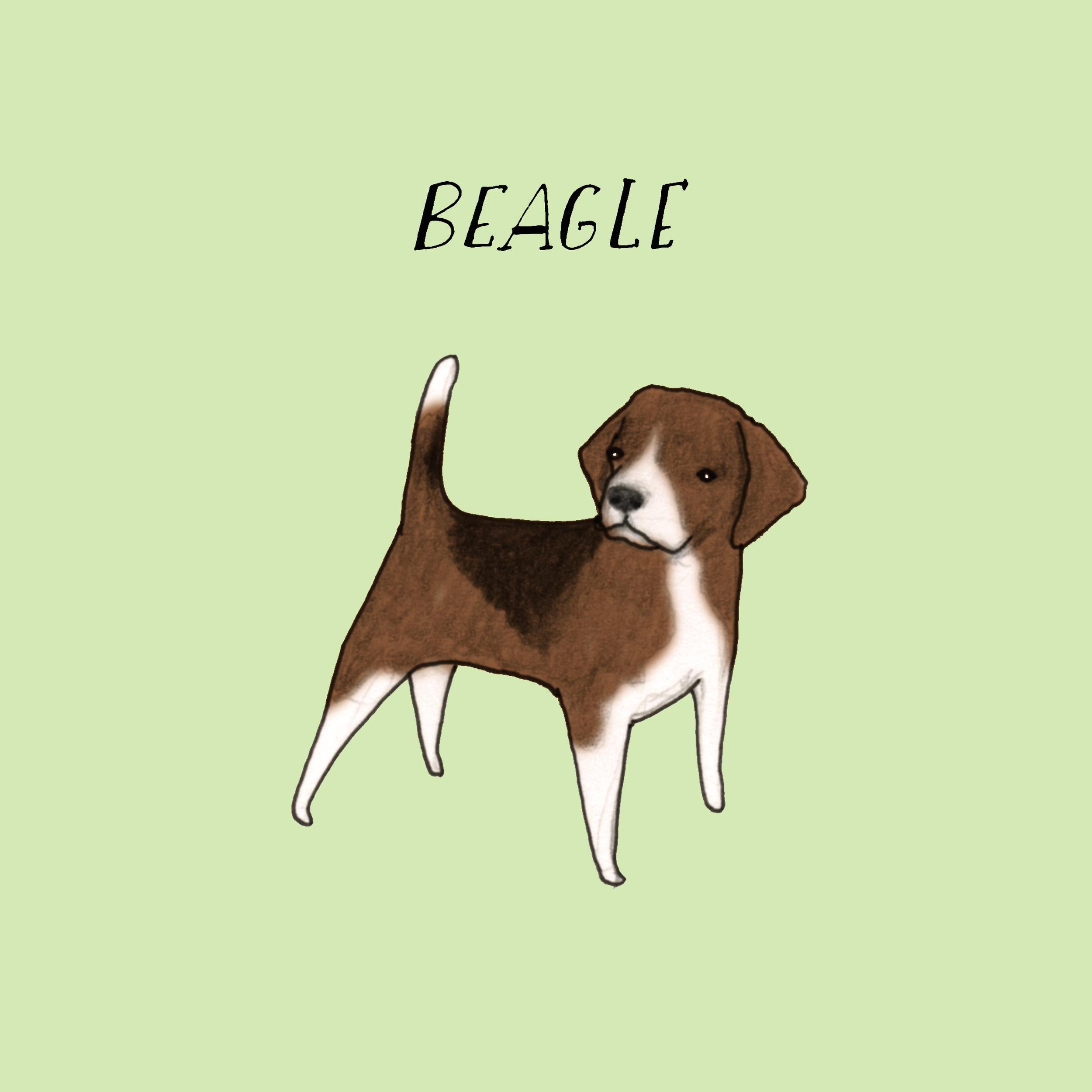Dogadaybeagle.jpg