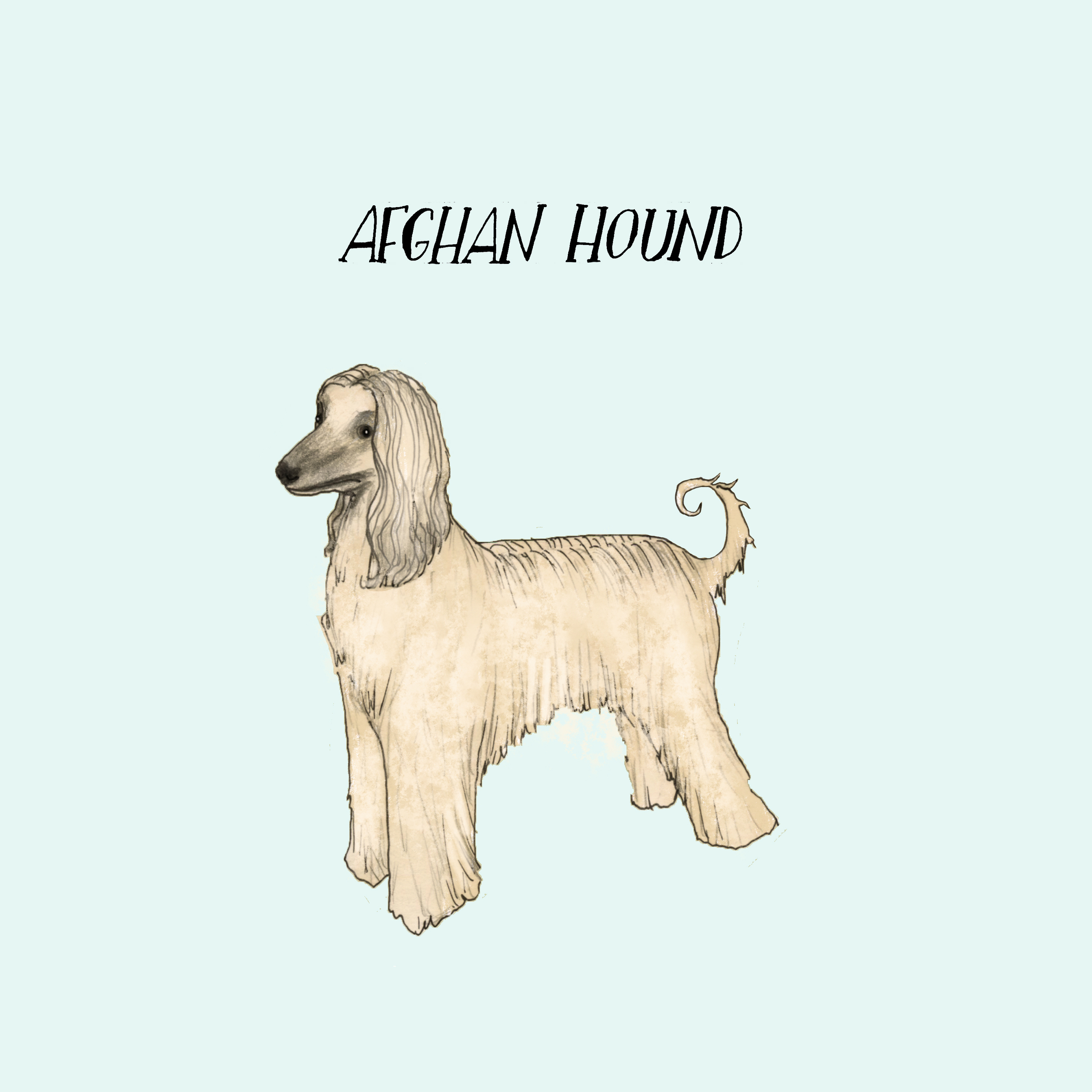 dogadayafganhound.jpg