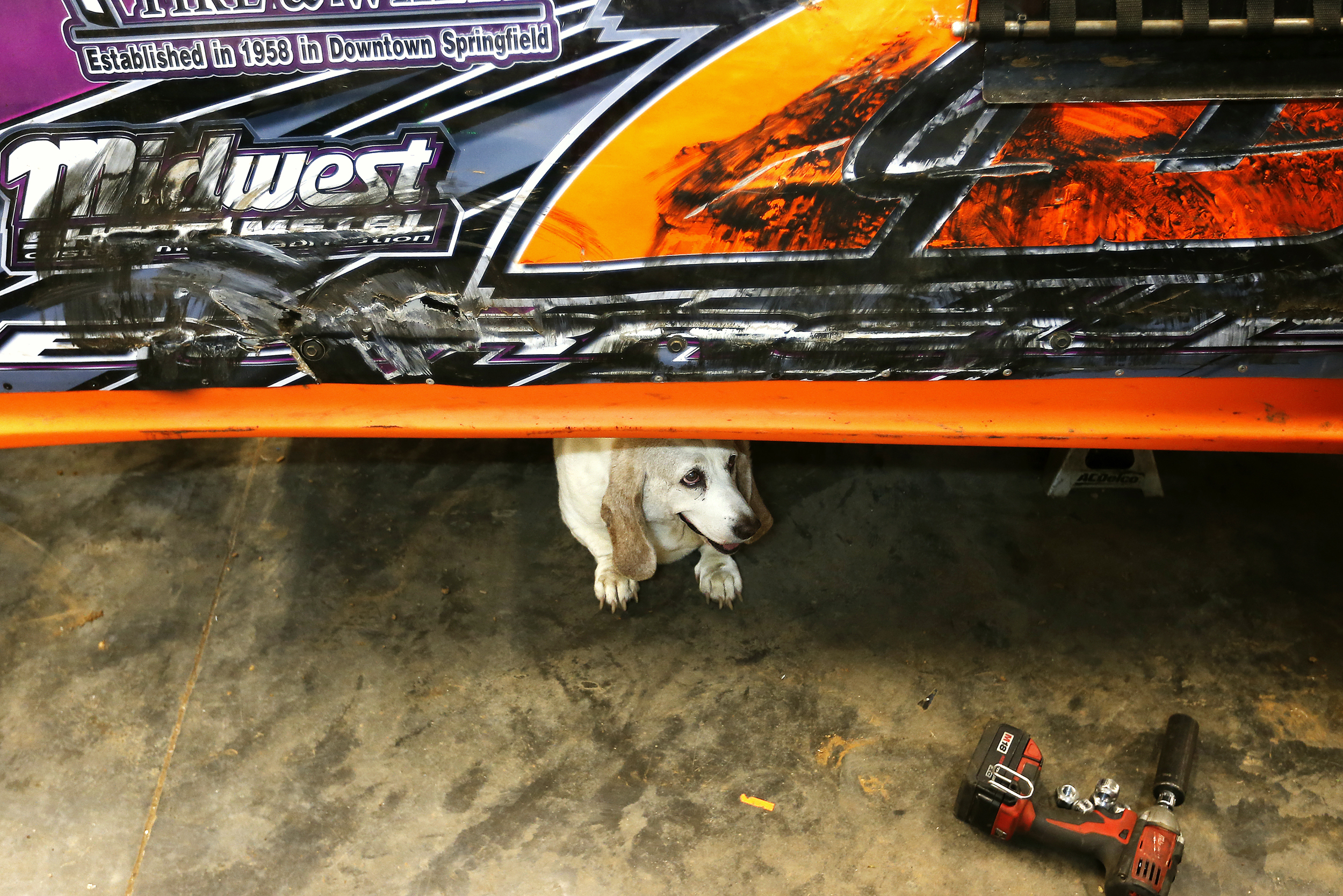 """Sophie, half of Mickey Burrell's couple of basset hounds, stays cool under Burrell's """"A-Mod"""" car in Springfield, Mo. on July 8, 2015 as he and Elston Moore work on getting the car back in shape for a race at Monett Speedway only a couple days away."""