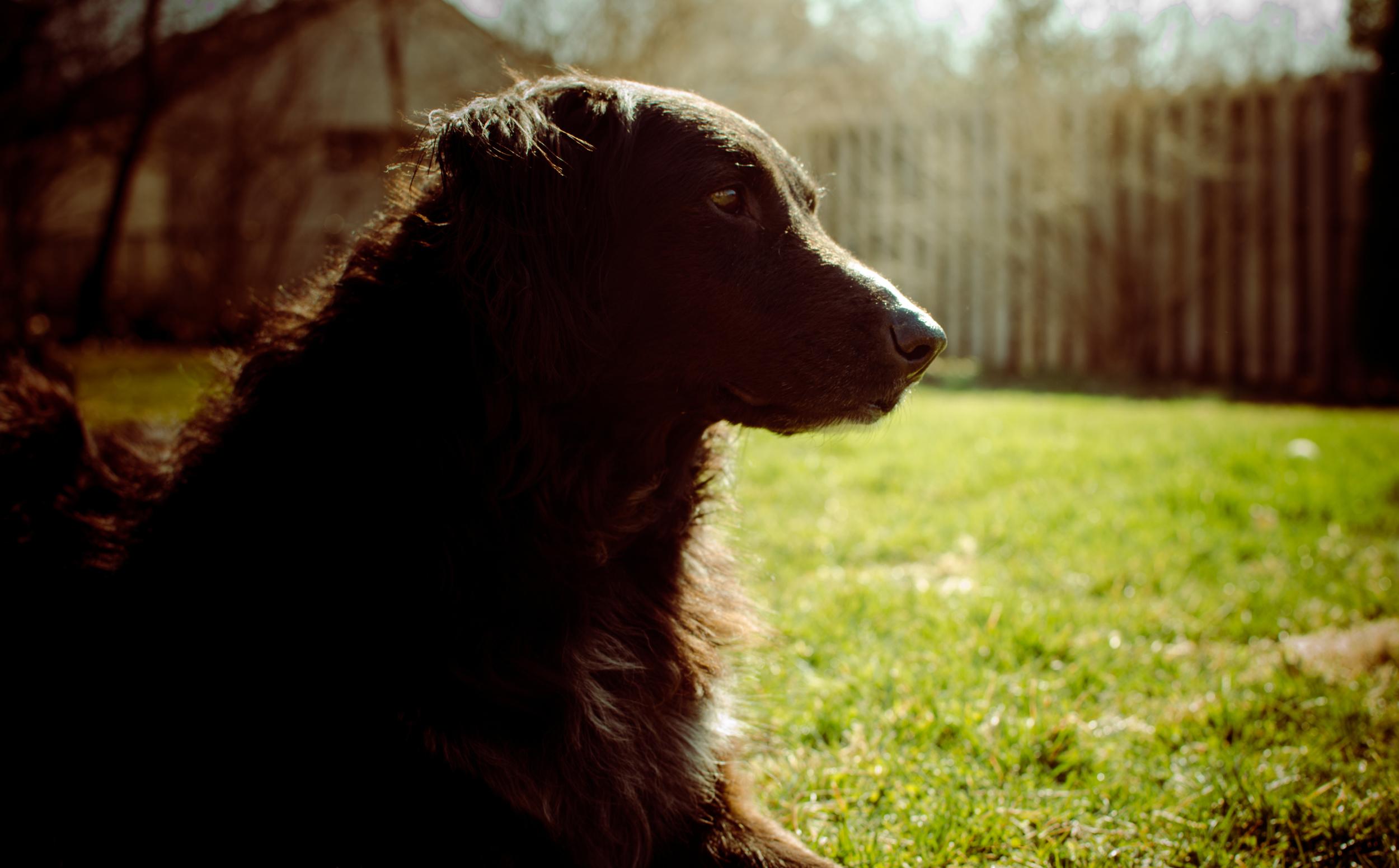 Abby, the hardest dog to photograph. Hopefully I've captured some of her strange personality!