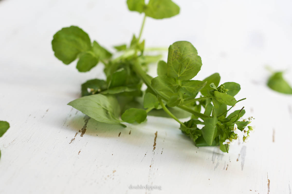 Now this herb has its season, pretty as a flower and so essentially beneficial for our health