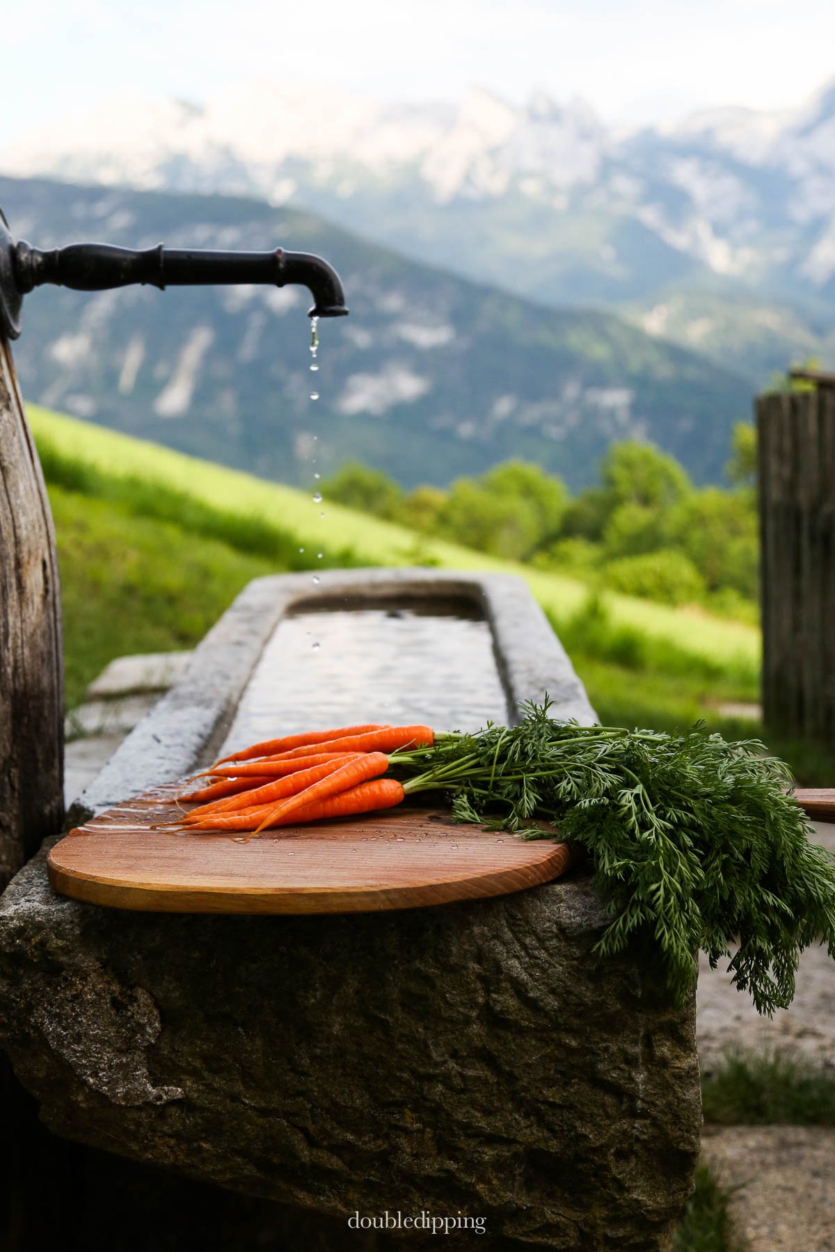 Fountain water from the mountaintop wash these young carrots fresh from the garden