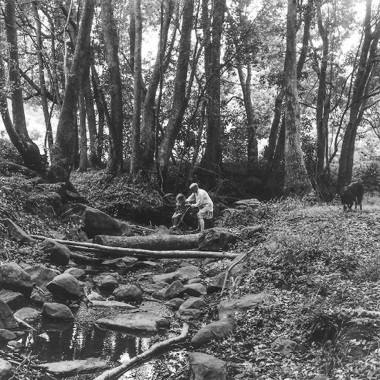 Edie and Sophie, Paddy's Creek, Bangalow, 2000