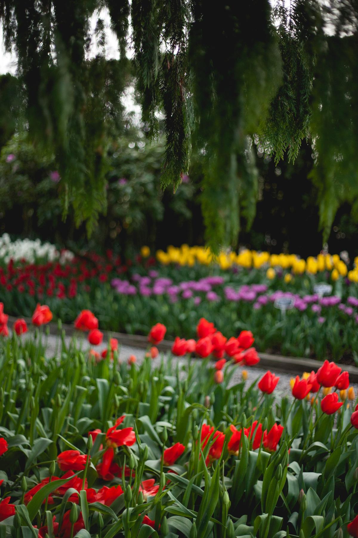 skagit-tulip-garden_annette-rotz.jpg