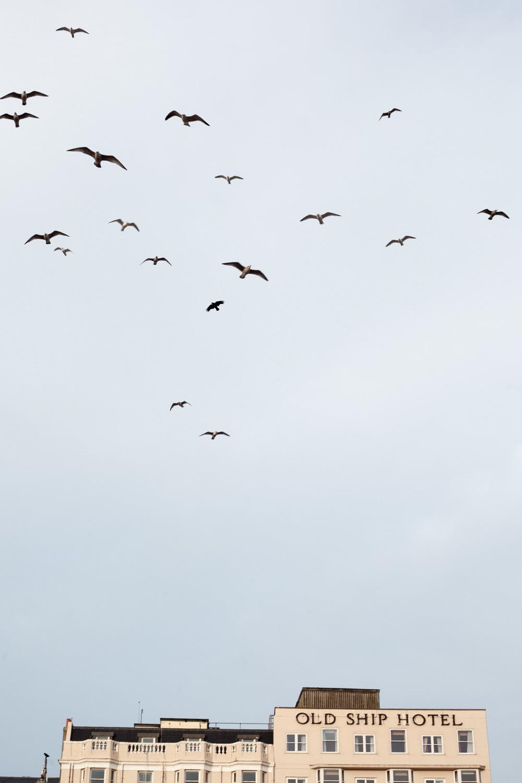 Floating seagulls, Brighton  December 2015