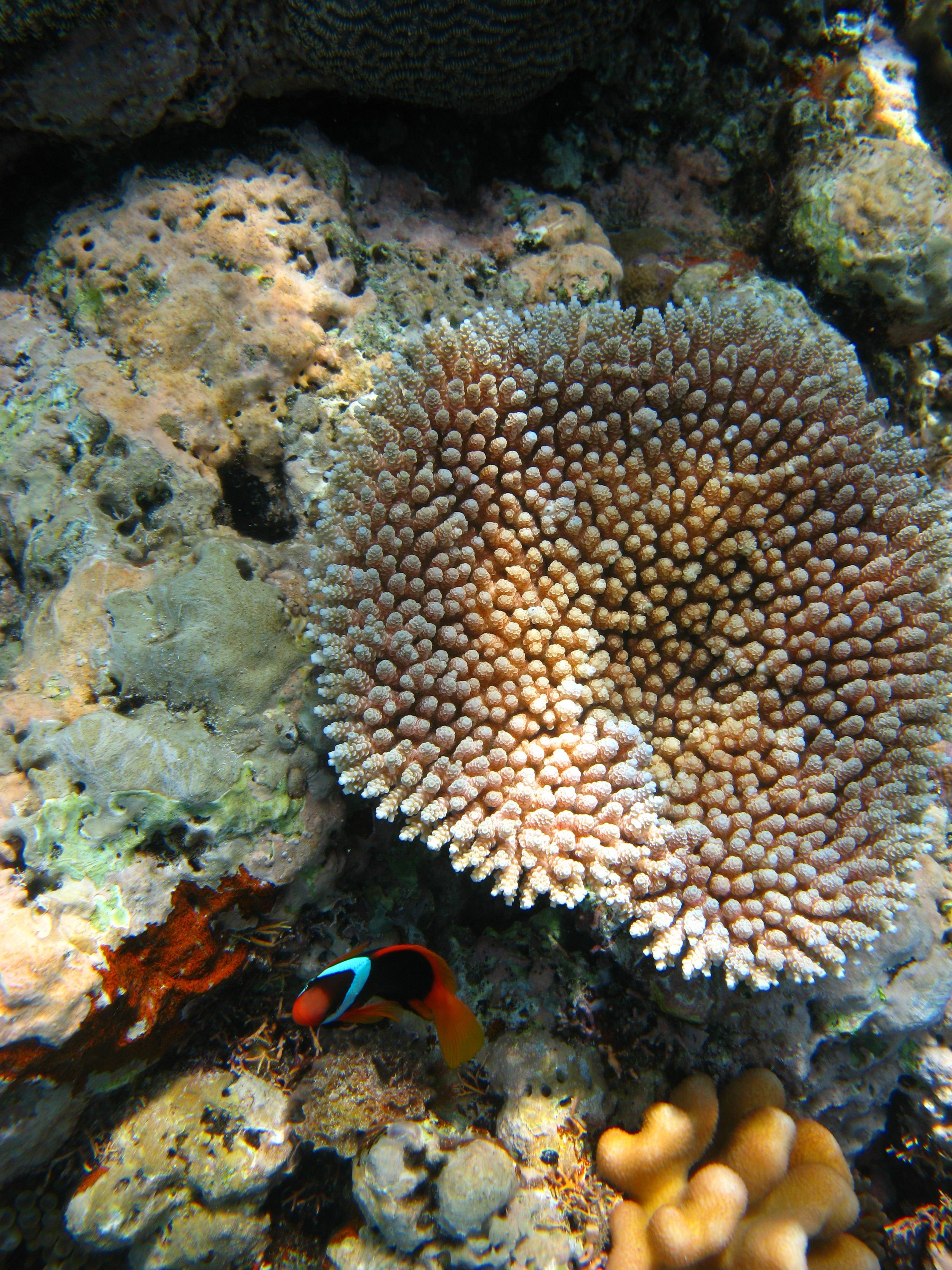 Great Barrier Reef in Cairns, AUS