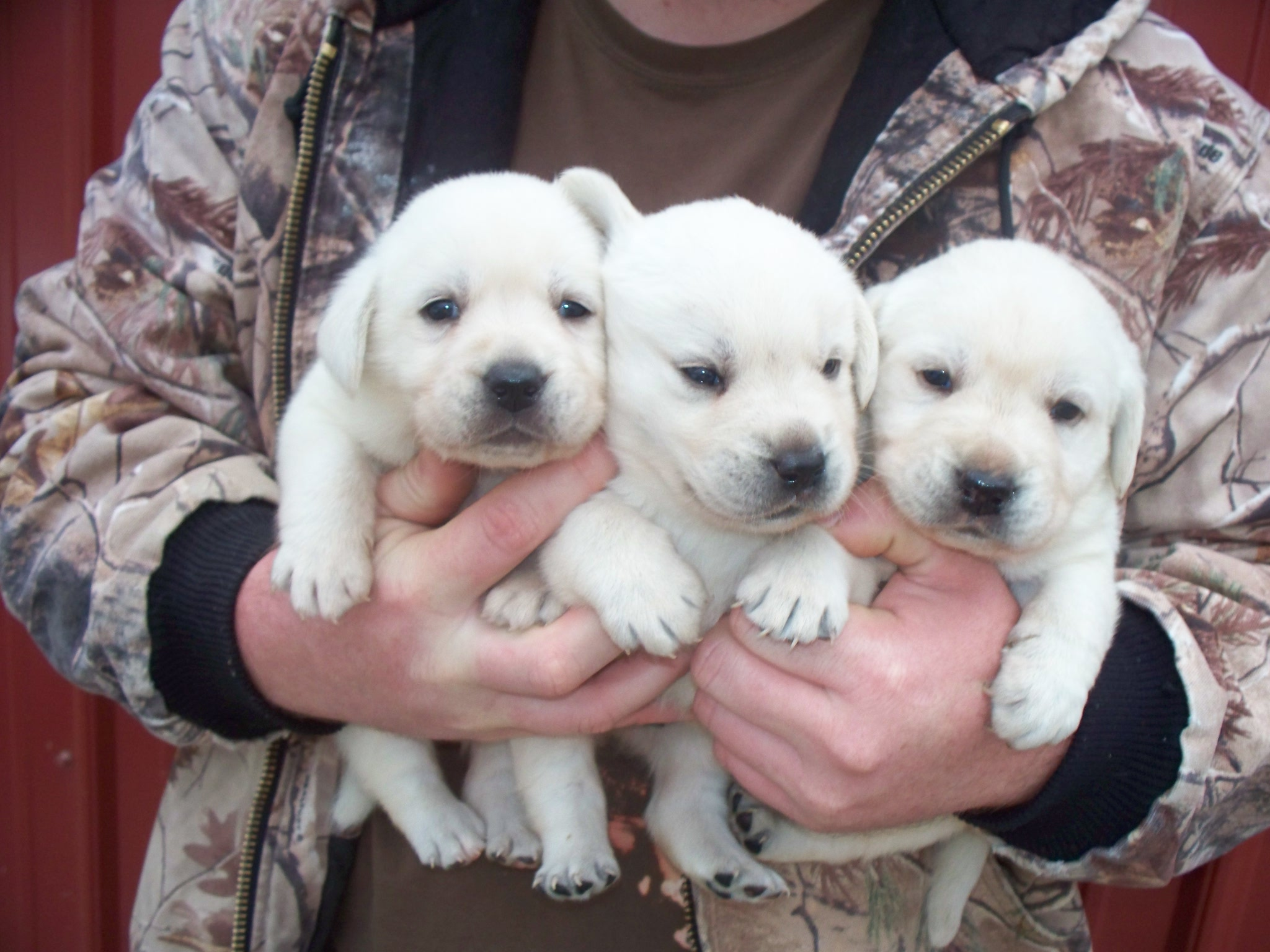 One of these sweet boys will be joining the CFR family in February