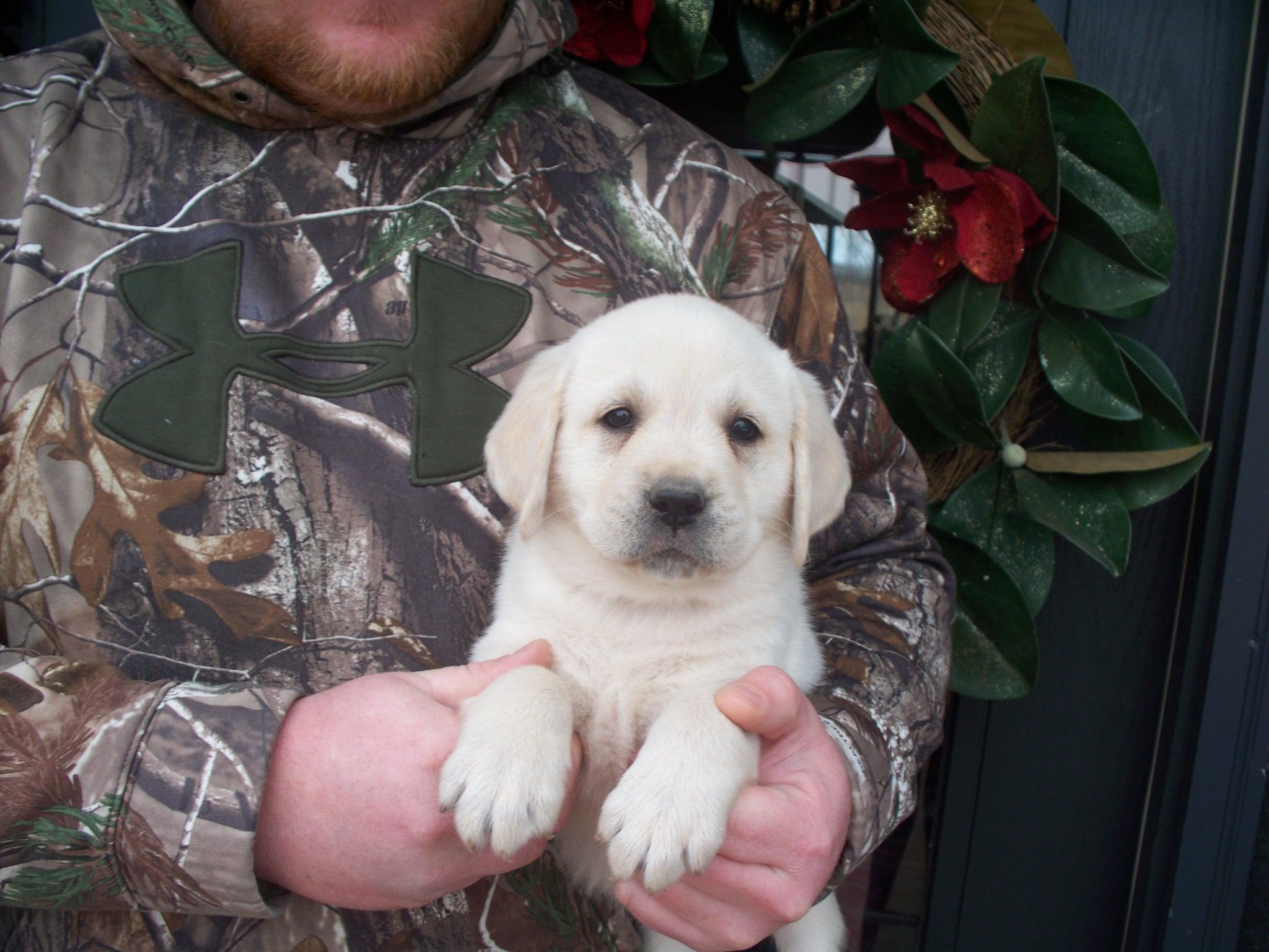 Rudy as a puppy!