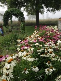 mom's_garden-rev.jpg