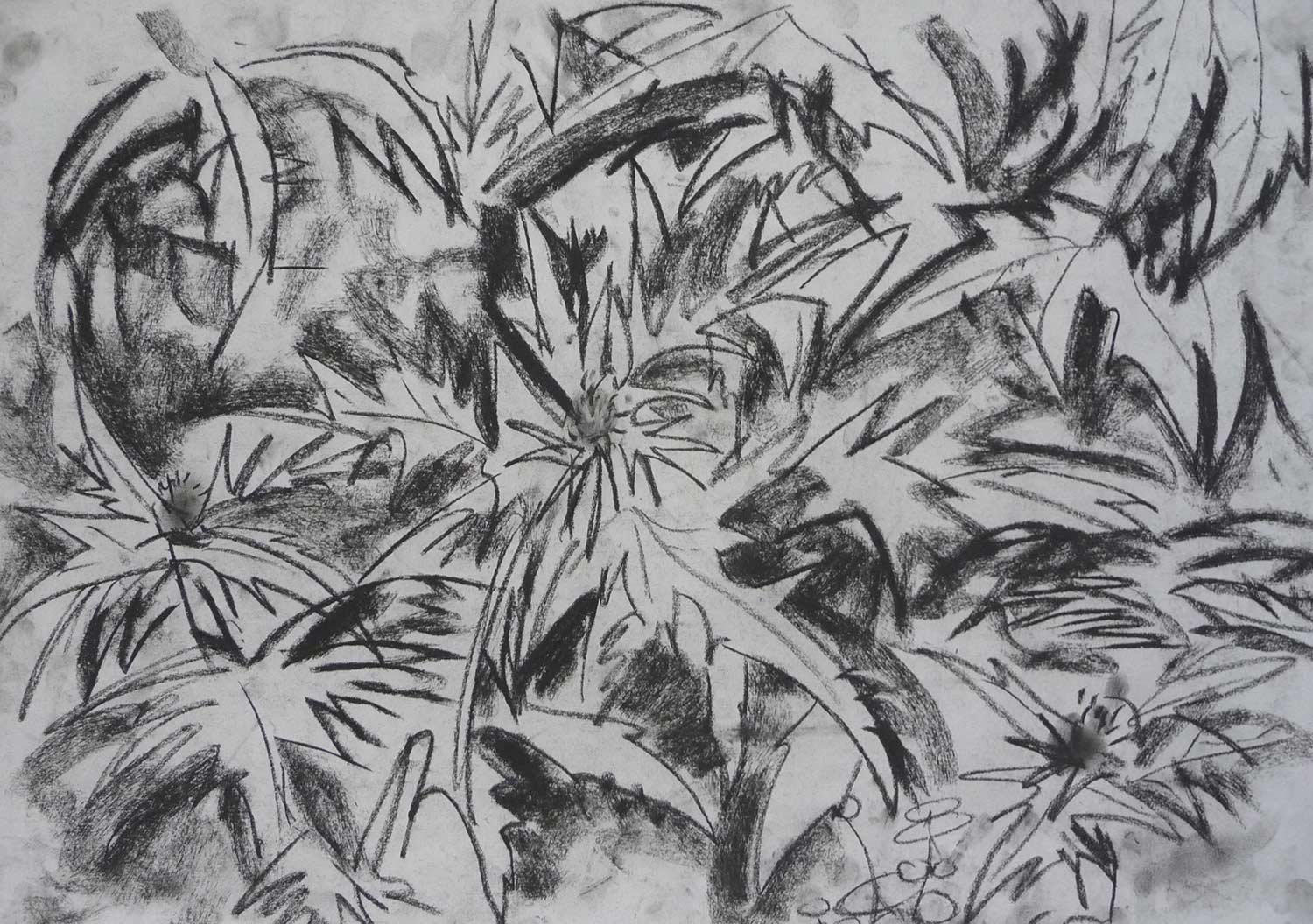 dark-drawing-spiky-leaves.jpg