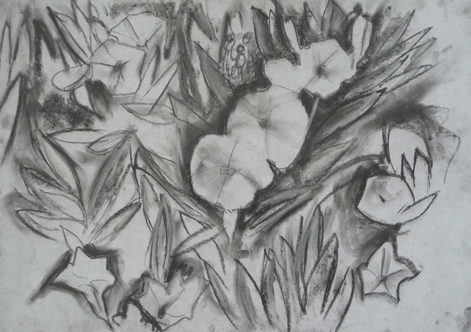dark-drawing-primula-flowers.jpg
