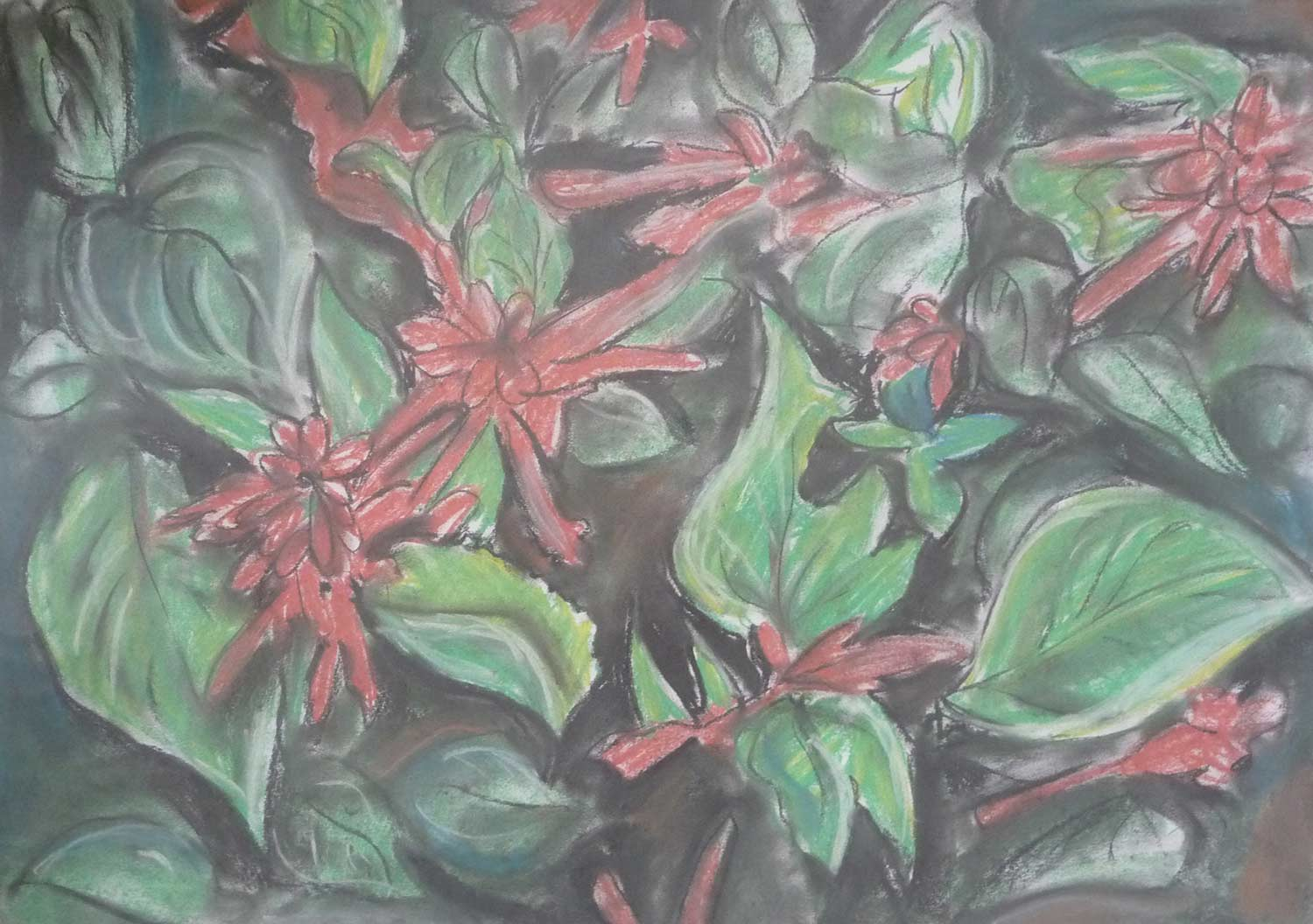 dark-drawing-red-salvia.jpg