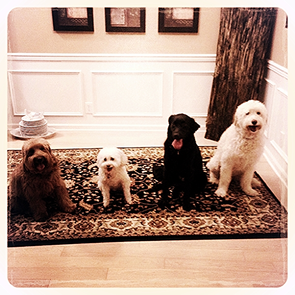 Some of our happy in home care pups.