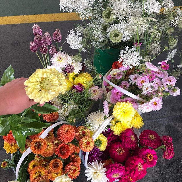 Pesticide free flowers en route for le weekend at Bâtard from @eandefarm 🥰💐#fraserhood #farmtoshop #yvrflowers