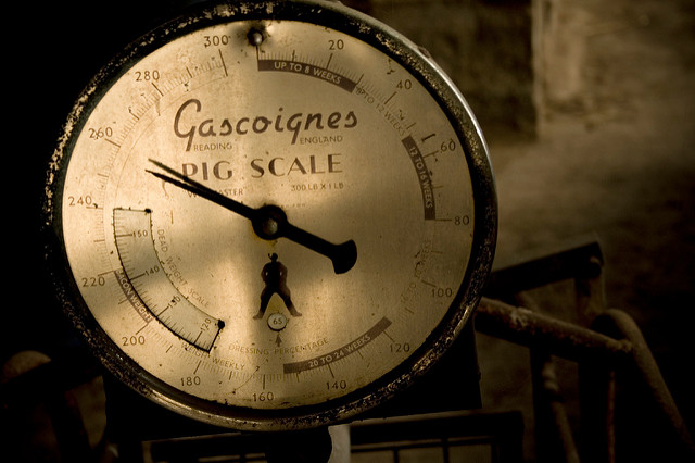 """ Gascoignes Pig Scale "" by  @notnixon , licensed under  CC BY-NC-SA 2.0 . Other pig images CC0 Public Domain."