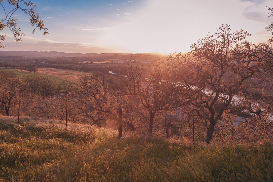 Templeton_Sunset.jpg