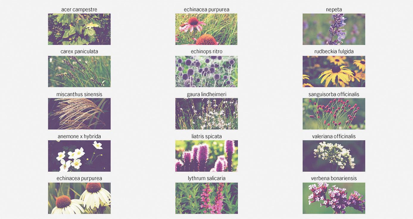 YAP_timeline_progetto18.jpg