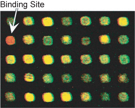 array detection of binding site