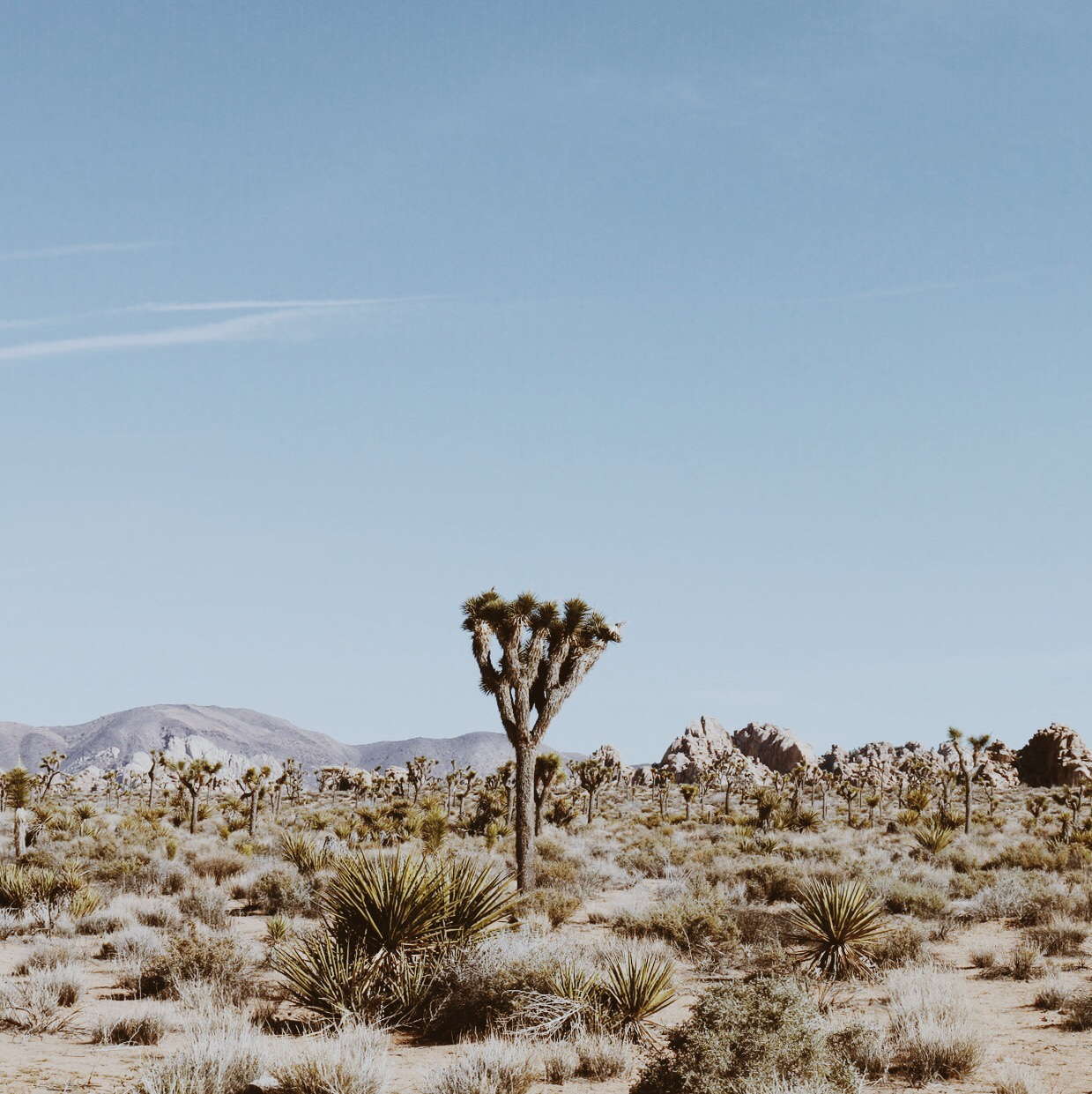 VIEW JOSHUA TREE COLLECTION