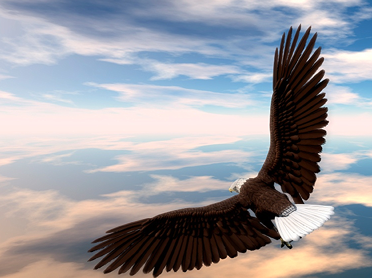 Interested in learning how to SOAR?  Find out about how I work with clients to help them attain their goals and soar above the stress in their lives.
